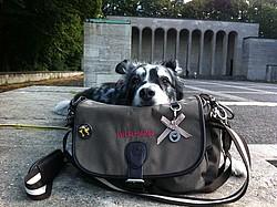 Wild Hazel Gassitasche der ersten Generation für Hundehalter im Test - Easy Dogs