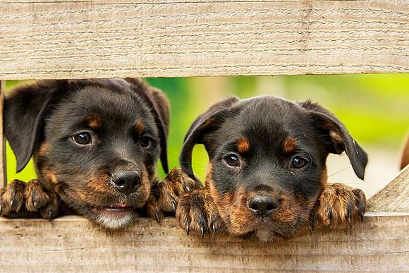 Tipps vom Rechtsanwalt: Wie soll mein Kaufvertrag beim Hundekauf aussehen? - Easy Dogs