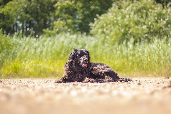 8 Tipps für das Leben mit einem blinden Hund - Easy Dogs