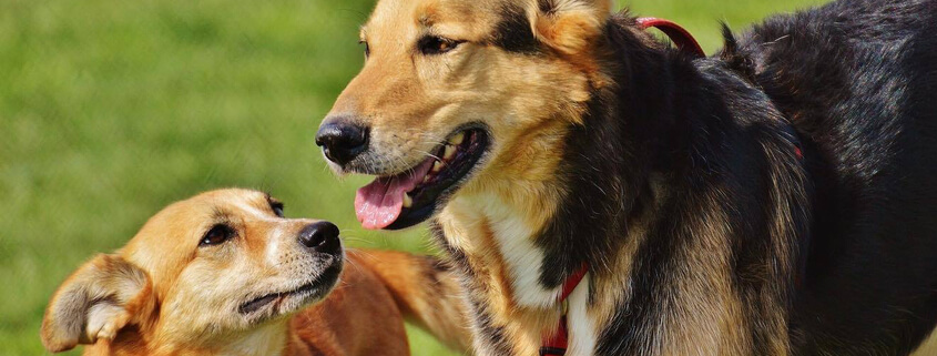 Hundebegegnungen entspannt meistern,Vortrag mit Nadine Wachter