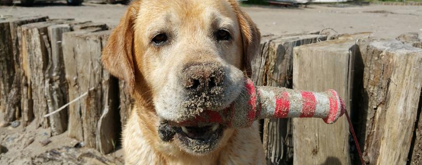 Wie beschäftige ich meinen Hund sinnvoll?, Vortrag mit Christopher Friemel