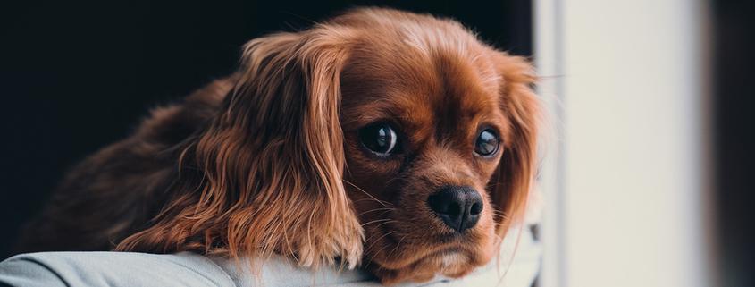 Lass mich nicht allein! Wenn Hunde nicht alleine bleiben können, Vortrag mit Sophia Betz