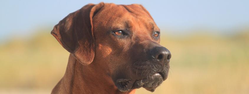 Von Machos und Angsthasen: Die Körpersprache des Hundes richtig deuten,Vortrag mit Sophia Betz