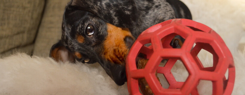 Sinnvolle Indoor-Beschäftigungsmöglichkeiten für jeden Hundetyp, Vortrag mit Christopher Friemel