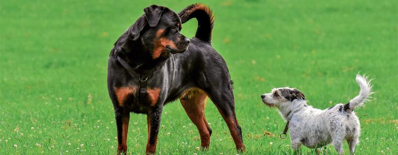 Von Machos und Angsthasen: Die Körpersprache des Hundes richtig deuten,Online-Vortrag mit Sophia Betz