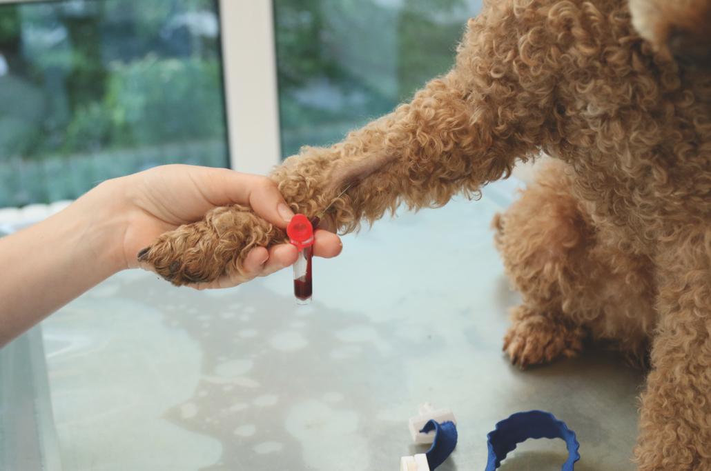 Hund Vergiftung Dauer