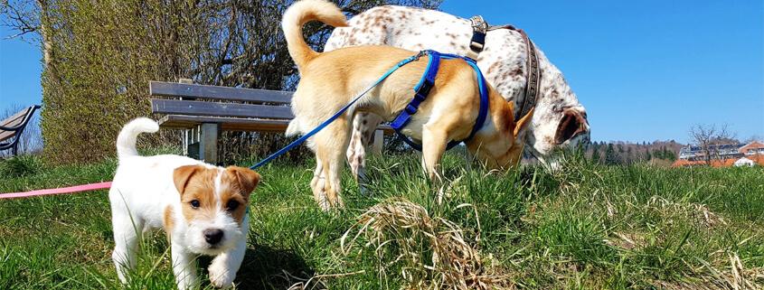 Hunde achtsam führen I – Bedürfnis- und bindungsorientierter Umgang,Online-Vortrag mit Maria Rehberger