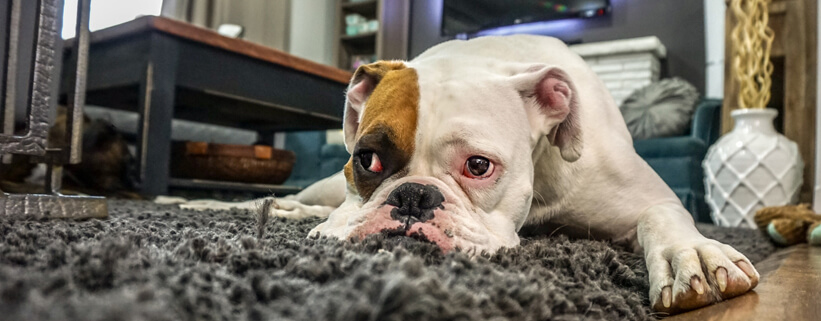 Wenn Hunde nicht alleine bleiben können,Vortrag mit Sophia Betz