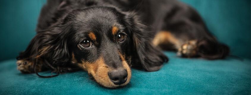 Chefsache – Hunde souverän im Alltag führen,Vortrag mit Maria Rehberger