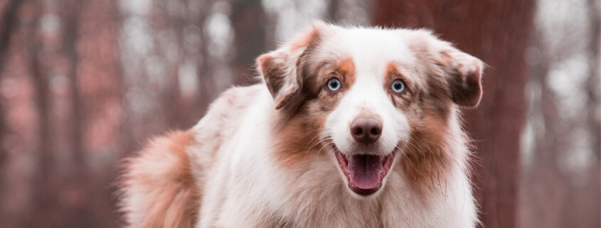 Hibbelhund – Leben und trainieren mit reaktiven Hunden,Vortrag mit Maria Rehberger