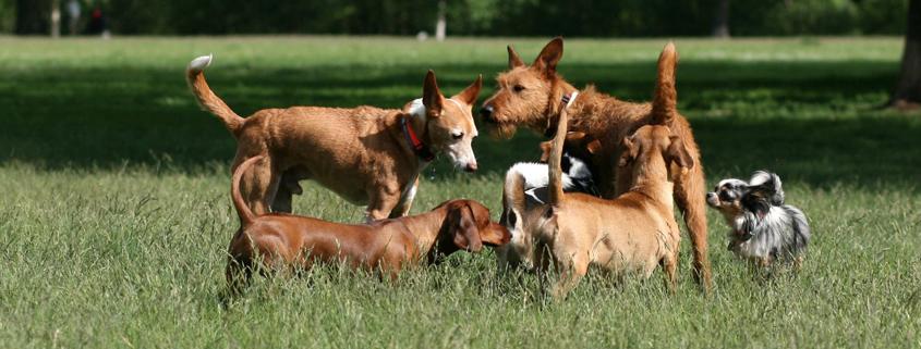 Von Machos und Angsthasen XXL: Die Körpersprache des Hundes richtig deuten,Tagesworkshop mit Sophia Betz