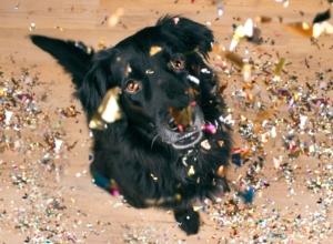 Geräuschangst –Wie Sie Ihren Hund gut auf Silvester vorbereiten, Vortrag mit Sophia Betz