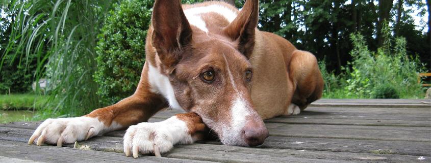Ein Hund aus dem Tierschutz – dankbarer Partner oder ängstliche Überraschung?,Online-Vortrag (Teil 1) mit Sabine Schinner
