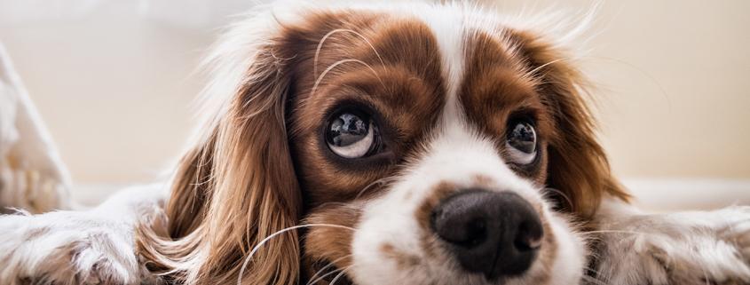 Lass mich nicht allein! Wenn Hunde nicht alleine bleiben können, Online-Vortrag mit Sophia Betz