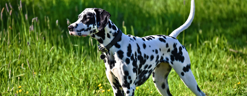 Von Machos und Angsthasen: Die Körpersprache des Hundes richtig deuten,Vortrag mit Carolin Hess